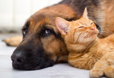pets, pestering pets, dog, cat, family pet, fam frenzy