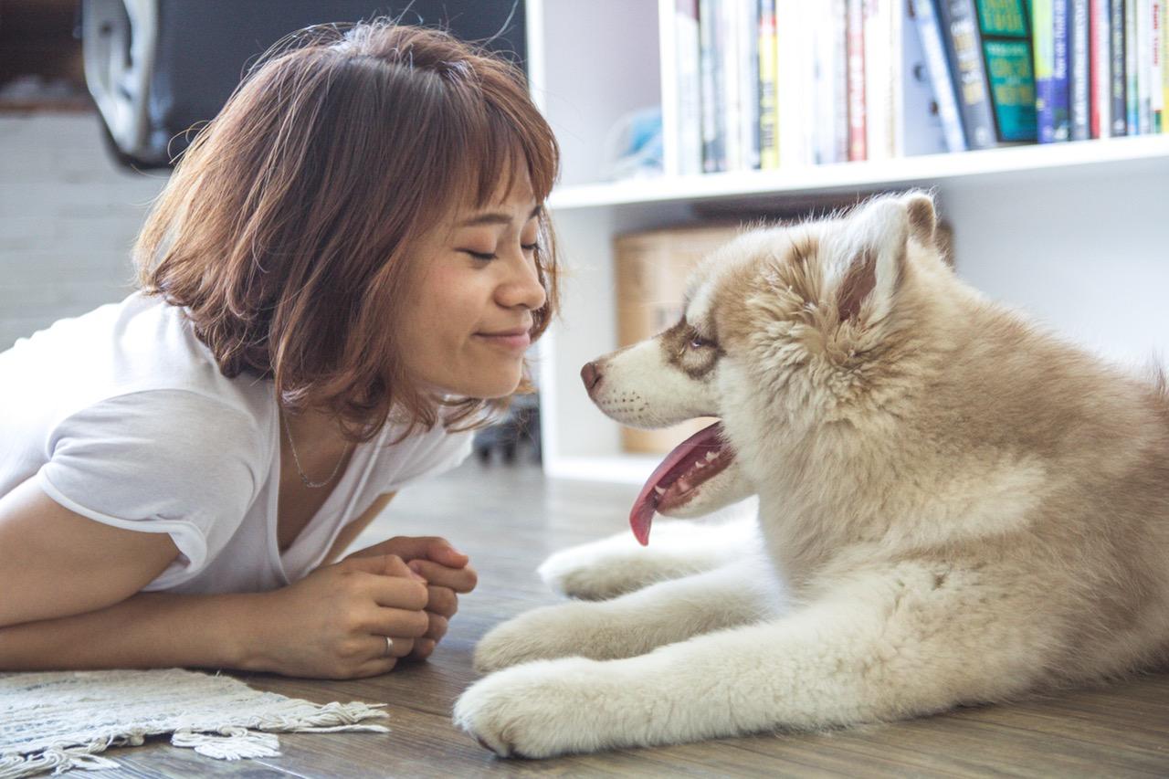 dog article
